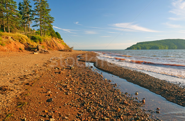 Rocky Beach in Early Evening Stock photo © wildnerdpix