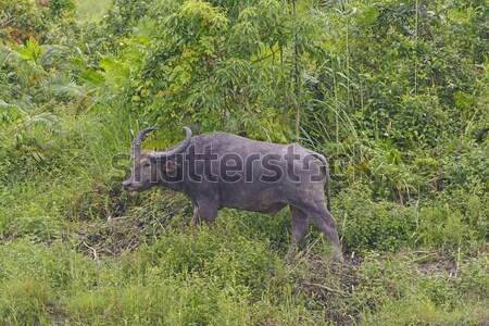 Warthog in the Wilderness Stock photo © wildnerdpix