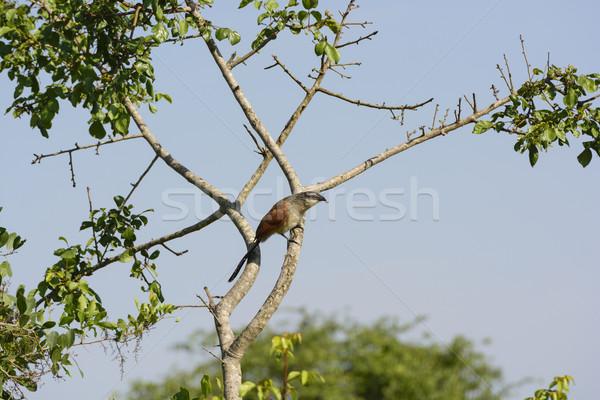 África lago parque animal biologia remoto Foto stock © wildnerdpix