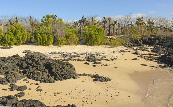 Unusual Vegetation on a Tropical Beach Stock photo © wildnerdpix