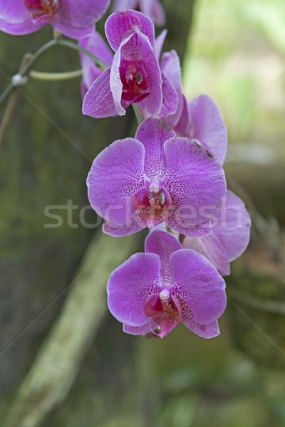 Orkide sıcak kuşak yaban hayatı Kostarika doğa Stok fotoğraf © wildnerdpix