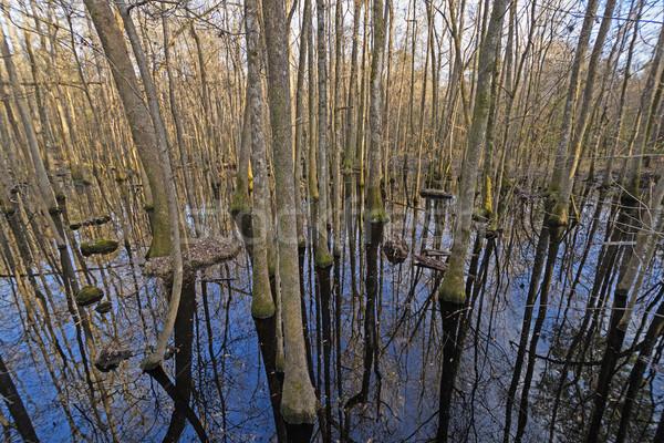Тени Размышления глубокий нижний землю лес Сток-фото © wildnerdpix