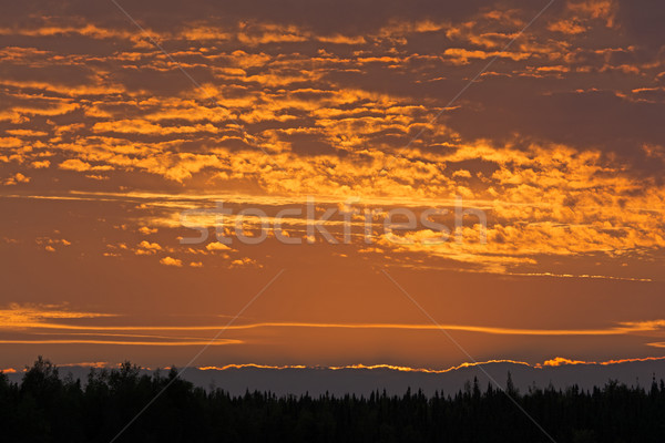 Red Skies in the Late Evening Stock photo © wildnerdpix