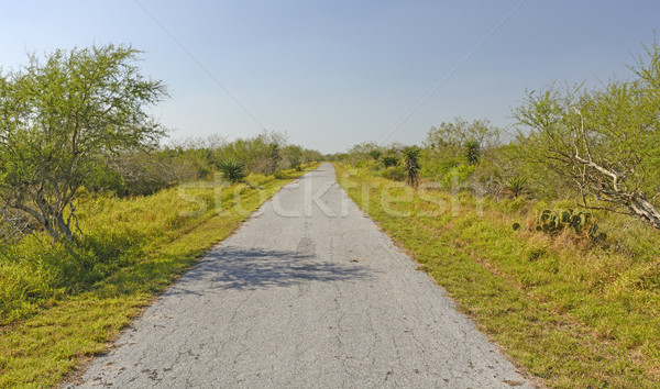 Lonely Path on a Barrier Island Stock photo © wildnerdpix