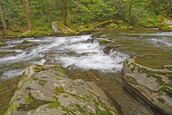 Springtime on a Mountain Creek Stock photo © wildnerdpix