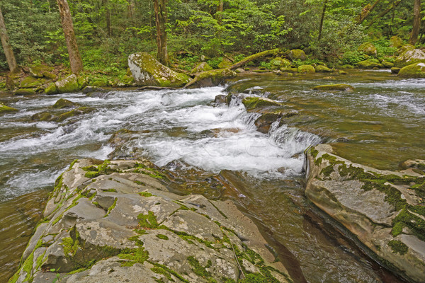 Primavera montana arroyo grande ahumado Foto stock © wildnerdpix
