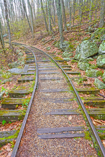 Old Railroad in the Forest Stock photo © wildnerdpix