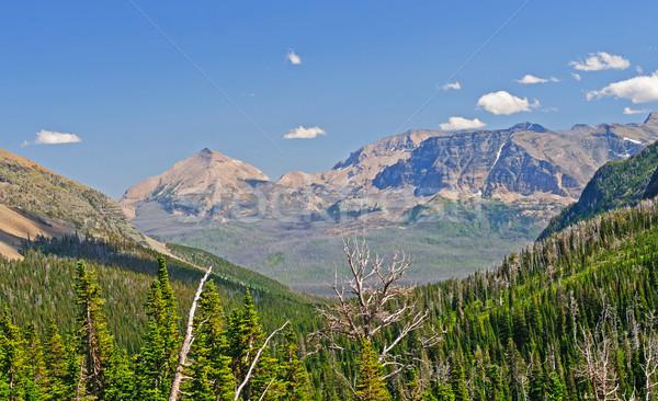 Mountain Vista along the Trail Stock photo © wildnerdpix