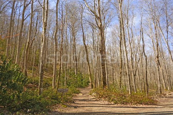 Mountain Trail on a Spring Day Stock photo © wildnerdpix
