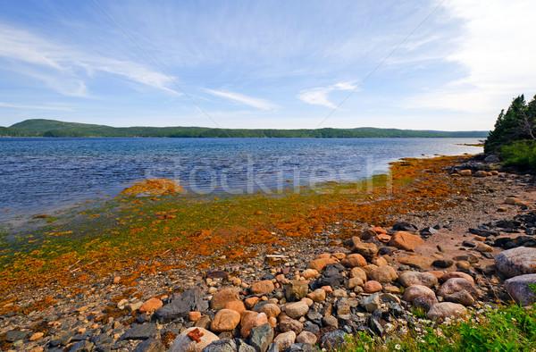 Protected Ocean Cove in Summer Stock photo © wildnerdpix