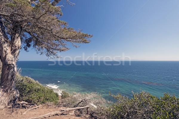 Okyanus sahil uçurum aile doğa Stok fotoğraf © wildnerdpix