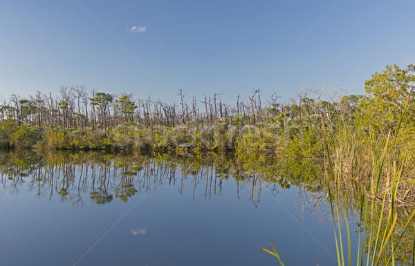 淡水 池 熱帯 青 穴 フロリダ ストックフォト © wildnerdpix
