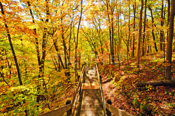 Trail into the Fall Forest Stock photo © wildnerdpix