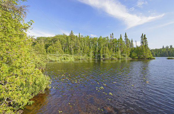 Stock photo: Quiet Cove in a North Woods Lake