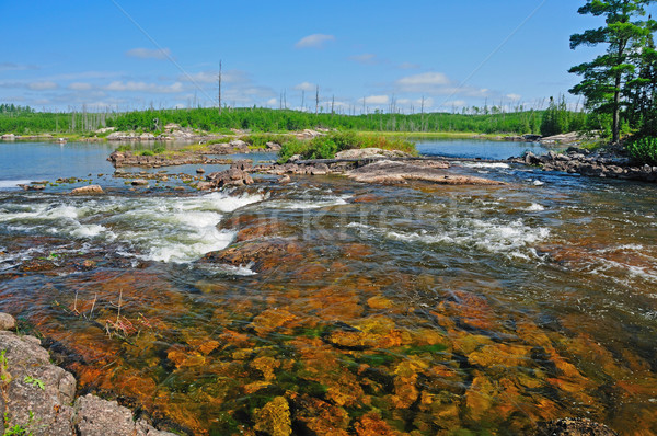 Rapids in the wilderness Stock photo © wildnerdpix