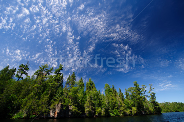 High clouds in the North Woods Stock photo © wildnerdpix
