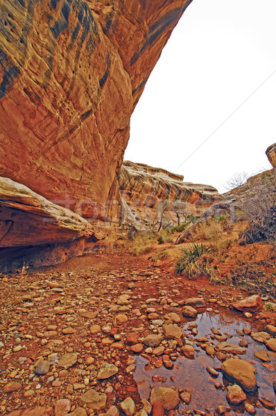Csendes patak sivatag kanyon fehér alatt Stock fotó © wildnerdpix