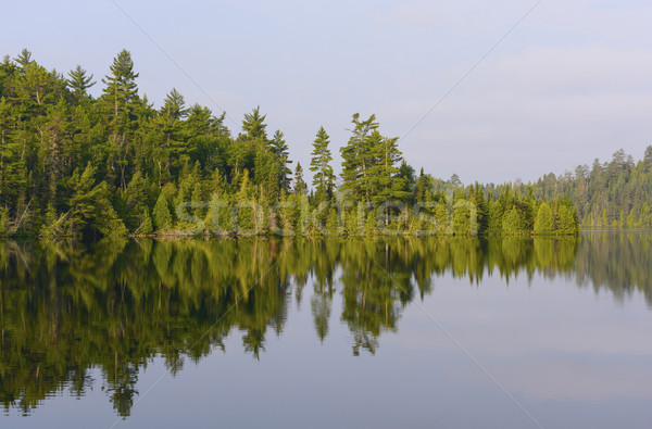 North Wood Pines in Morning Stock photo © wildnerdpix