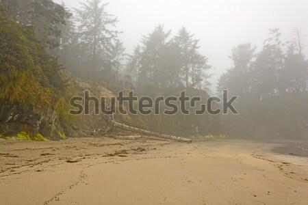 Morning Fog on Coastal Beach Stock photo © wildnerdpix