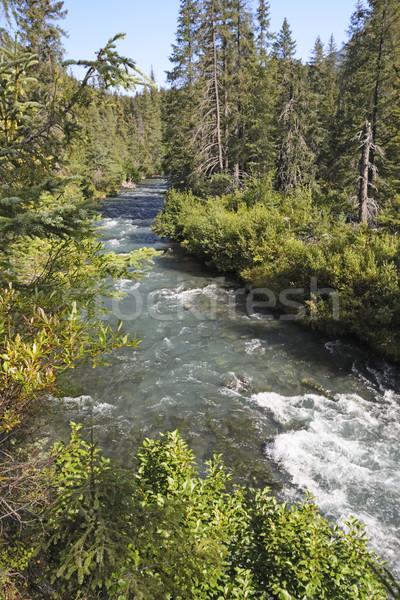 Hegy folyam napos idő patak erdő félsziget Stock fotó © wildnerdpix