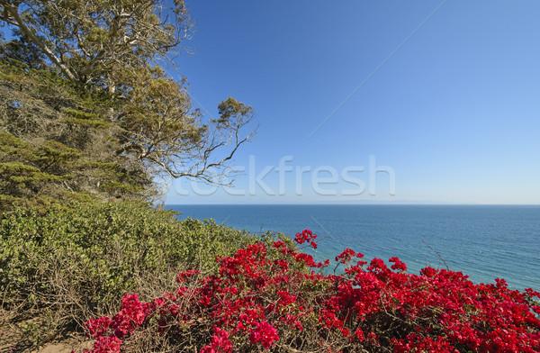 Renkli çiçekler okyanus sahil mavi Stok fotoğraf © wildnerdpix