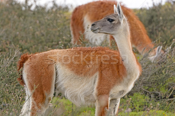 Doğa biyoloji uzak güzel açık yaban hayatı Stok fotoğraf © wildnerdpix