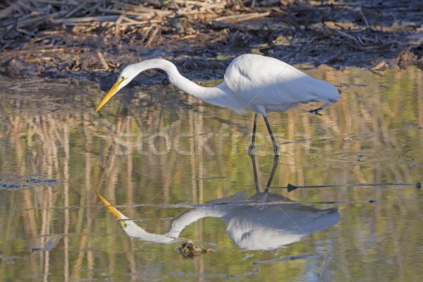 Caccia riflessione porta acqua natura panorama Foto d'archivio © wildnerdpix