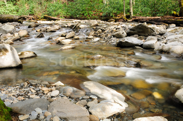 Stock photo: Early spring in the smokies