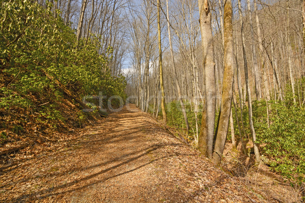 Wilderness Trail in the Mountains Stock photo © wildnerdpix