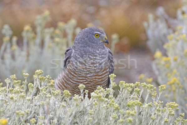 Riposo riserva natura uccello animale biologia Foto d'archivio © wildnerdpix