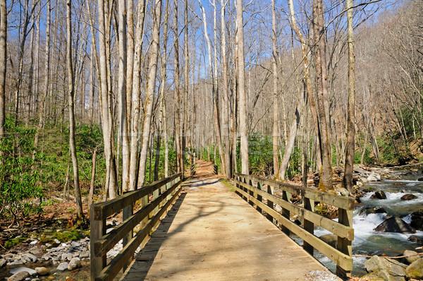 Bridge to the Wilderness Stock photo © wildnerdpix