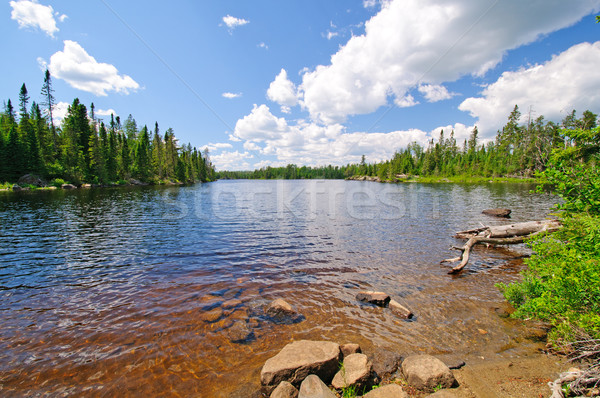 Summertime in the North Woods Stock photo © wildnerdpix