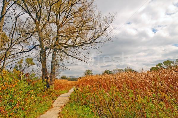 Walkway into a marsh land Stock photo © wildnerdpix