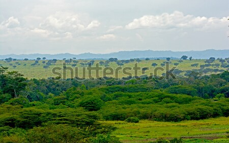 Forest and Savanna in Africa Stock photo © wildnerdpix