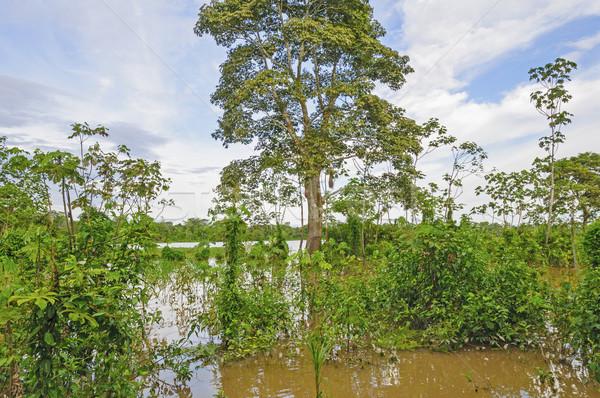 Orman yüksek su Amazon ağaçlar güzel Stok fotoğraf © wildnerdpix