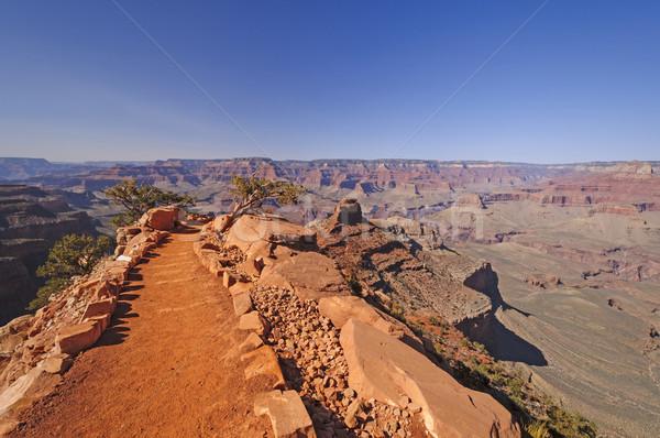 Trail into a Wild Canyon Stock photo © wildnerdpix