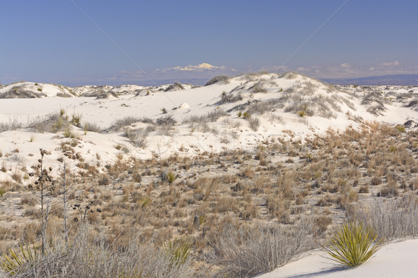 Stock photo: White Sands beneath the Mountains