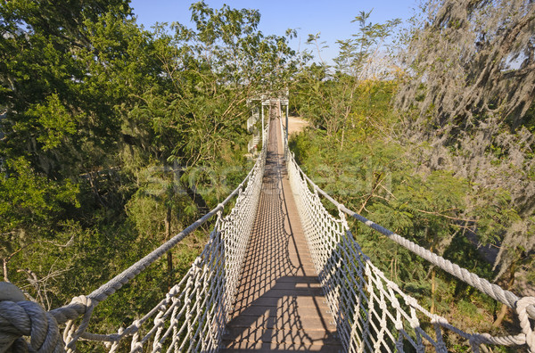 Canopy Walk in a Subtropical Forest Stock photo © wildnerdpix
