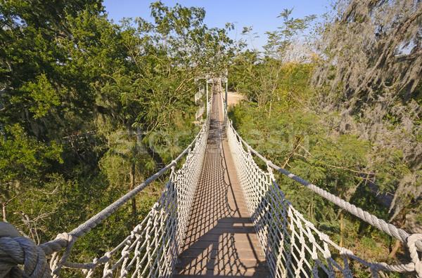徒歩 亜熱帯の 森林 サンタクロース 野生動物 木 ストックフォト © wildnerdpix