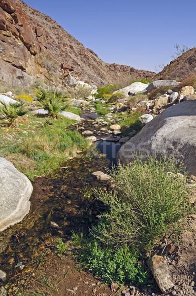 Deserto enseada naturalismo primavera palma desfiladeiro Foto stock © wildnerdpix
