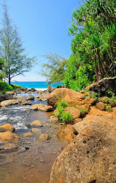 тропические ручей океана побережье воды зеленый Сток-фото © wildnerdpix