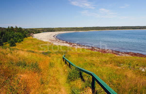 Trail to a remote ocean cove Stock photo © wildnerdpix