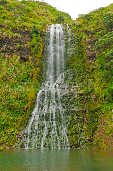 Dramatic Falls in the greenof early spring Stock photo © wildnerdpix