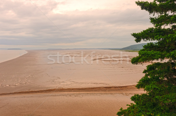 çamur düşük gelgit okyanus panorama kıyı Stok fotoğraf © wildnerdpix