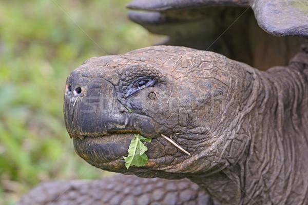 Głowie shot gigant żółw Święty mikołaj wyspa Zdjęcia stock © wildnerdpix