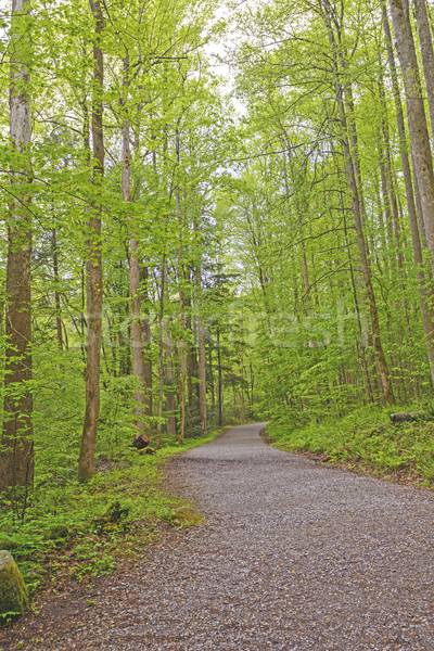 Chemin vert printemps smoky montagnes Tennessee Photo stock © wildnerdpix