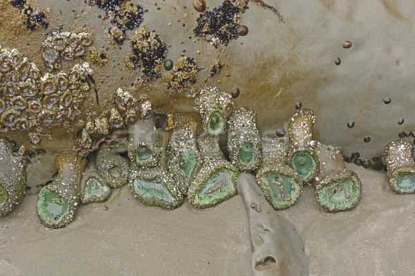 Zielone niski fala wybrzeża Oregon charakter Zdjęcia stock © wildnerdpix