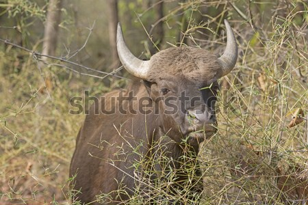 Forêt parc Inde nature paysage animaux Photo stock © wildnerdpix
