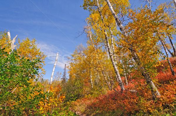 North Woods trail in Fall Stock photo © wildnerdpix