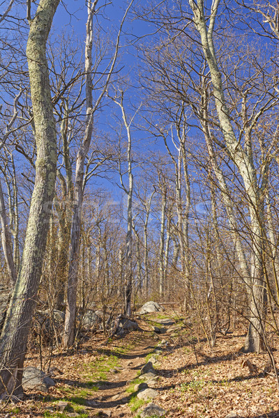 Heading up a Mountain Trail in Early Spring Stock photo © wildnerdpix